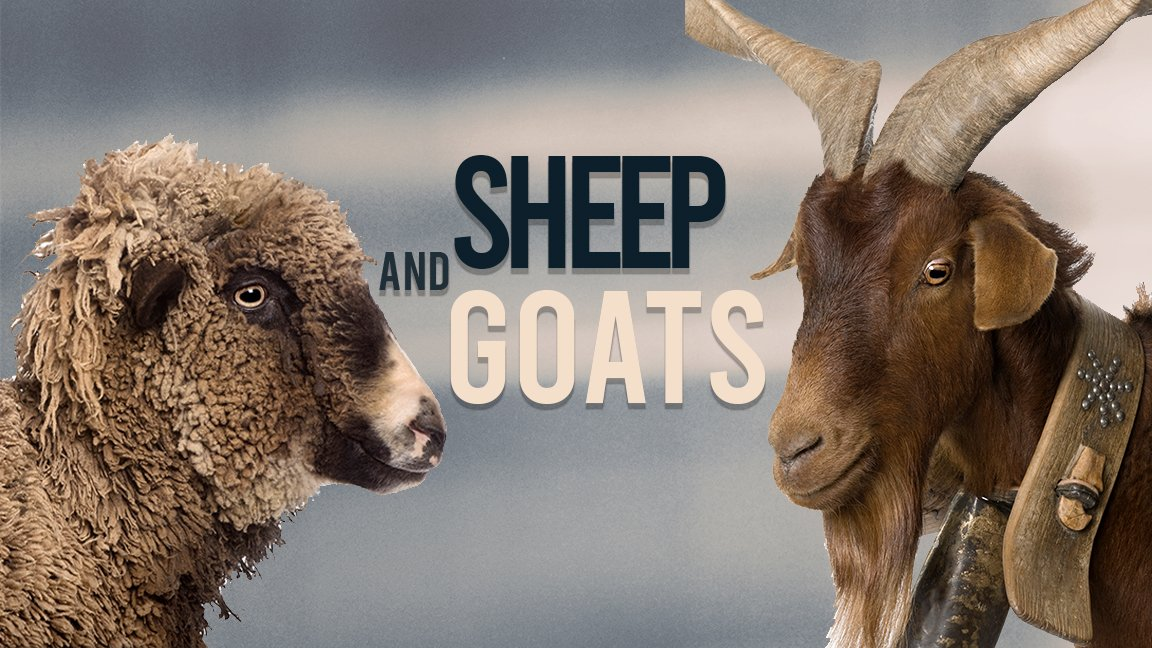 Sheep and Goats